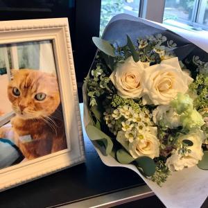 お花に囲まれて、幸せな銀ちゃん。