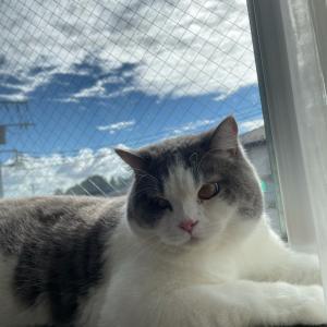 天気も晴れて猫さんものんびり♪テナチュールは難しい