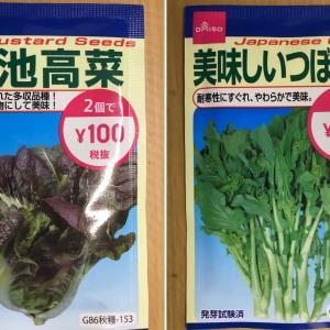 ダイソーつぼみ菜と高菜を今週も収穫~!! [3/7⑥]