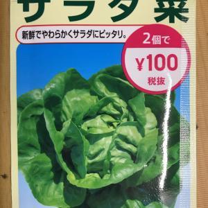 ダイソーの種からサラダ菜を収穫~!! [3/28]