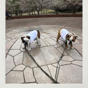 桜の影時計!と7nana風景だよ〜ん♫