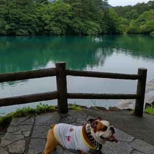 エメラルドグリーンの沼とブルドッグ7風景!