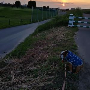 個性ある夕散歩は体力作り!?