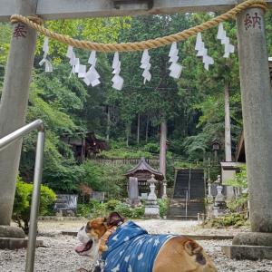 鍾乳洞から若御子神社と桜の名所へ