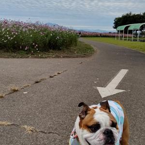 佐野から70km 先の寄道は鬼怒川土手散歩?!