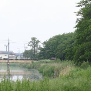 川に戻ってみたら…👀あの声は👂オオヨシキリワールド!( ^o^)ノ