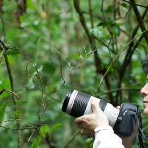 NHKスペシャル「ホットスポット 最後の楽園  太古の命守る 奇跡の森〜ブラジル マタアトランティカ〜」を観ていたら、地球の反対側に気持ちは飛んでいた!👀💨