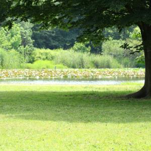 見沼でウチワヤンマに遭っちゃった(^0^;)~閉鎖解除の公園めぐり見沼編~