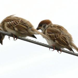 露出補正をバク盛りして撮ってみた(^_^;~ささやかな鳥撮影の話(笑)~