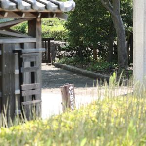 日本庭園は花盛りだけど(;^ω^)