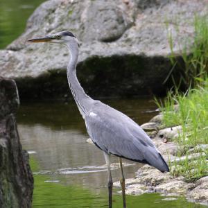 梅雨だけど、鳥の世界は自立の季節💕カワセミさん、雀さんの幼鳥に出会う!(^ー^)