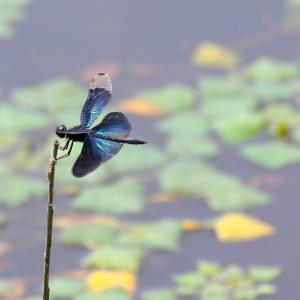 鳥も去り水も動かぬ酷暑かな