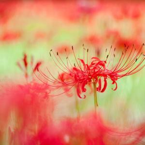 瞑想にて、女心と秋の空