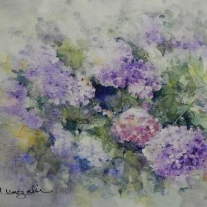 紫陽花を描いてみました。