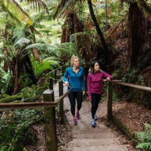 メルボルンからビクトリア州旅行!森林浴でリフレッシュはどう?