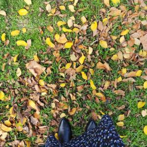 メルボルン散歩中の風景。季節感や色んな変化を楽しむ。