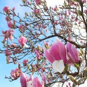冬のメルボルンに、春が足音立ててやって来た!