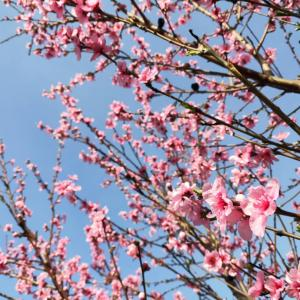 街は色で溢れてる!春のメルボルンをお届け!