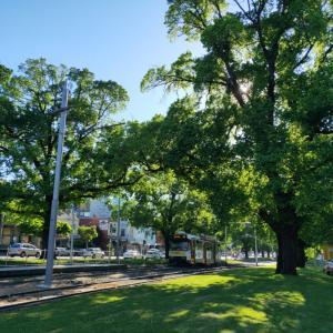 緑の季節!ガーデンシティーメルボルンをぷらり。