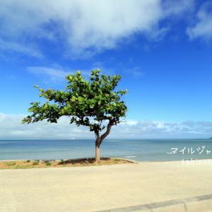 沖縄☆絶景ドライブ&せんべろの旅。
