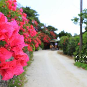 竹富島サイクリング。ゆったり、のんびりした島時間を満喫