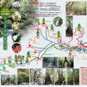 屋久島☆白谷雲水狭トレッキング。苔むす森でリフレッシュ