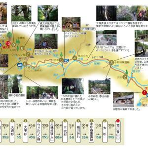 屋久島☆縄文杉トレッキング。樹齢3,000年以上の屋久杉に会いたい