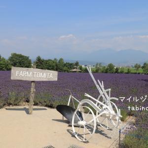 北海道 富良野・美瑛絶景ドライブ☆ラベンダーや青い池、彩の丘など
