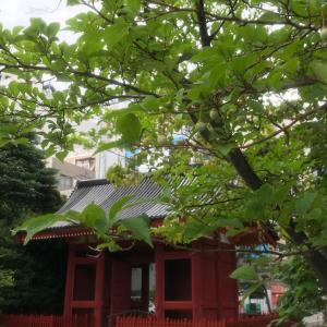 雨ラン浅草寺の後はなめこ汁で温まる