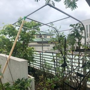 庭に物干し設置