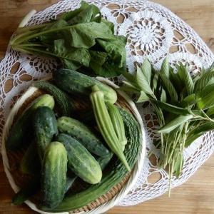 本日満月🌕。 土より上になる作物は、収穫抜群。自然農収穫編。