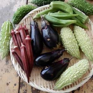 雨上がりの 次の日の 本日の収穫 期待大✨ やはり多く採れた。