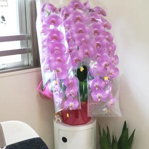 家の中にグリーンがあるのもいいし、生花があると更にいいよね!