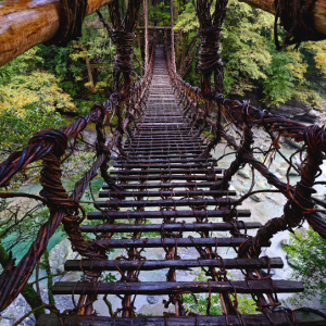 秋雨に濡れるかずら橋 (徳島県 三好市 西祖谷山村)