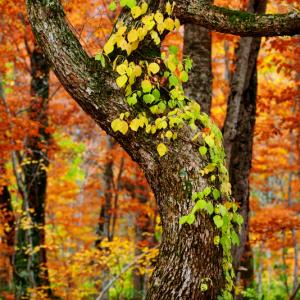 秋の森の風景 (秋田県 北秋田市 森吉)
