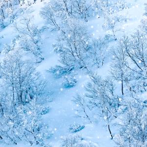 雪の粉の舞い (八甲田山 青森市)