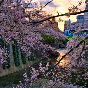 面影橋に向かう東京さくらトラム (東京都 豊島区)
