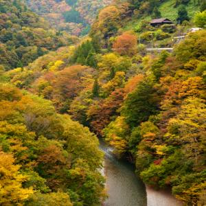 丹波川の秋 (山梨県 丹波山村)