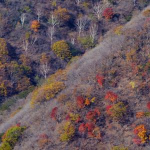 秋色のパレット (半月山/栃木県 日光市)
