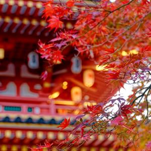 朝の光を受ける高幡不動尊 五重塔 (東京都 日野市)