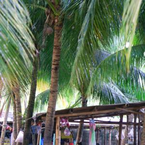 南の島の海の家 (フィリピン セブ島)