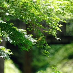 緑の森の風景 (東京都 八王子市)