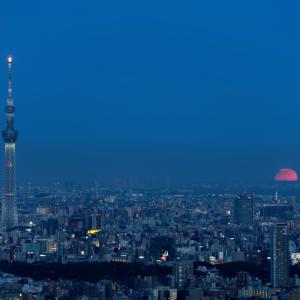 東京湾に顔を出す満月 (東京都 豊島区)