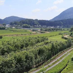 これがニッポンの里山、里道の美であります。 熱中症などに負けないのが大和魂なのであります。
