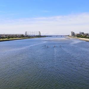 緊急レポート。武庫川に棲息する絶滅危惧サイクリストの生態をとらえました。