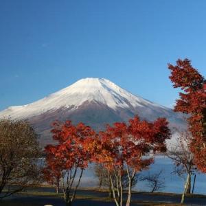 令和元年11/11現在~富士山~紅葉