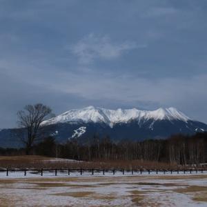 2020年1月~開田高原の冬の野鳥