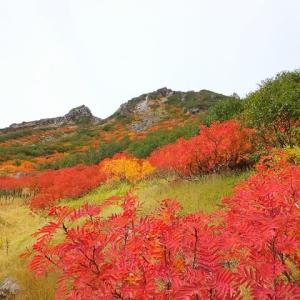2013年~16年~御嶽山の紅葉
