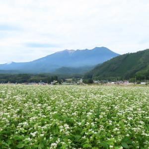 2020年9/16現在~開田高原ソバの花と夕焼け