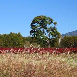 2020年10/21現在~開田高原の紅葉と野鳥